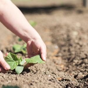 cultiver la terre en provence
