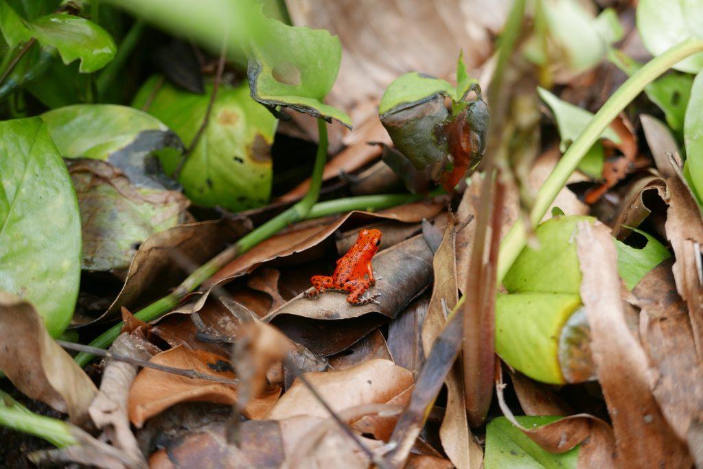Agro-foresterie durable et préservation de la biodiversité au Brésil