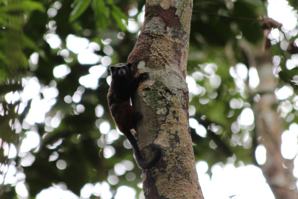 compensation volontaire et biodiversite au bresil