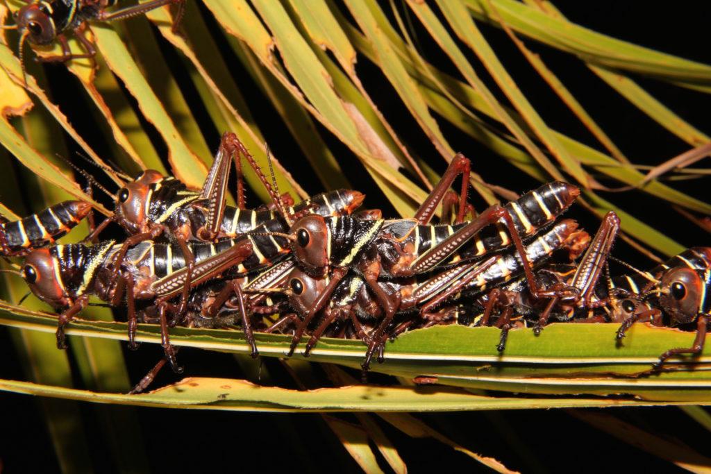 protection de la biodiversite en amazonie